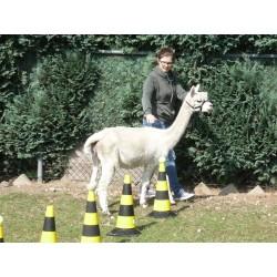 Cadeaubon 'Verwen de Alpacafan'
